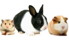 Malé zvieratá icon