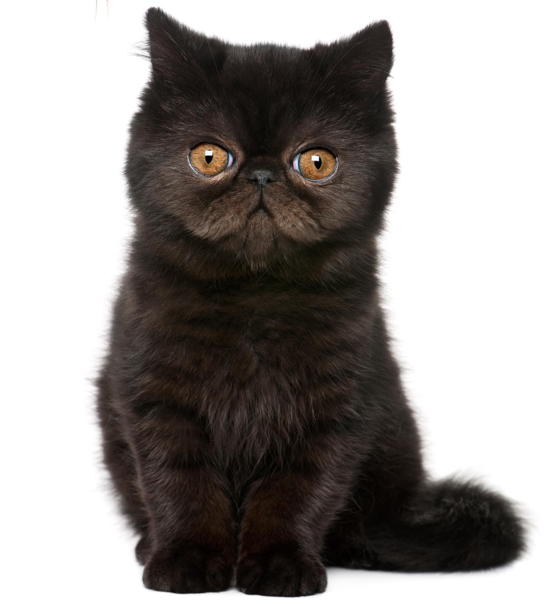 Mačky icon